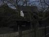 00-Daemon im Baum1.tn.jpg