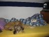 Scotty_und_Timmy_im_Bett1.tn.jpg