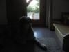 2009_08_16_09_15_27.jpg