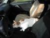 [Jan_2009] Timmy im Auto1.tn.jpg