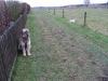 02-[Jan_2009] Spaziergang mit Hund und Katz1.tn.jpg