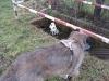 03-[Jan_2009] Spaziergang mit Hund und Katz2.tn.jpg