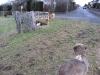 04-[Jan_2009] Spaziergang mit Hund und Katz3.tn.jpg