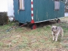 06-[Jan_2009] Spaziergang mit Hund und Katz4.tn.jpg