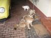 07-[Jan_2009] Spaziergang mit Hund und Katz5.tn.jpg