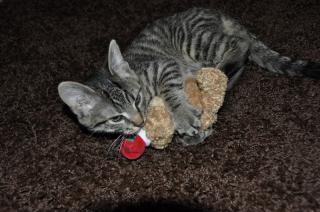 Niko kaempft mit Teddy