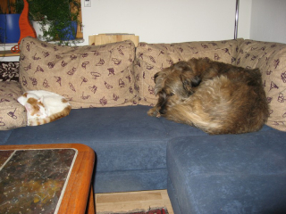 06-[01-02-2009] Scotty und Timmy auf dem Sofa1.tn.jpg