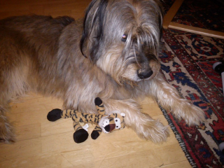 Scotty und Tiger 1