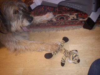 Scotty und Tiger 7