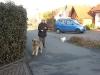02-[Jan_2009] Spaziergang mit Scotty und Timmy2.tn.jpg