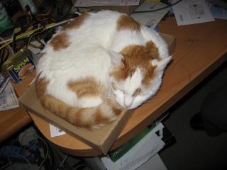 Timmy in Karton auf Schreibtisch1.tn.jpg