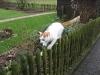 06-Timmy auf dem Zaun1.tn.jpg
