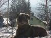 06-[Jan_2009] Scotty im Schnee1.tn.jpg