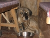 11-[Jan_2009] Scotty in Knoedelalm1.tn.jpg